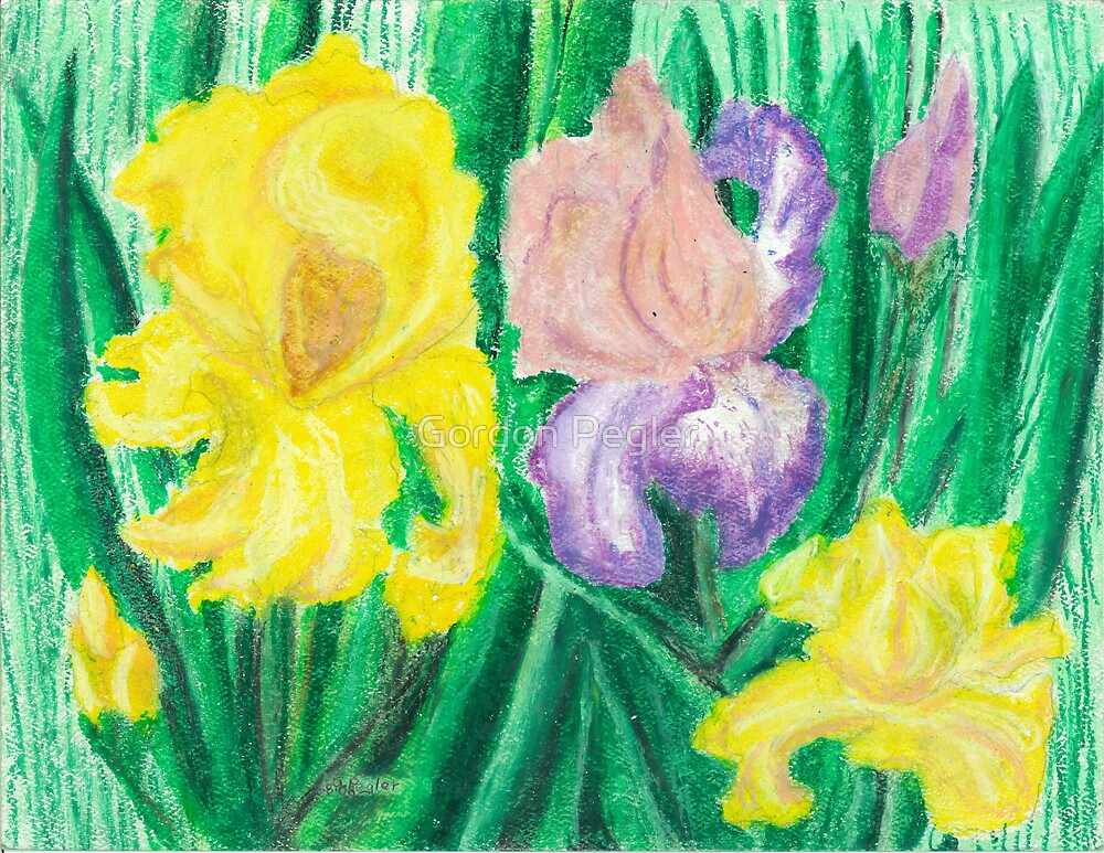 Iris - oil pastels by Gordon Pegler