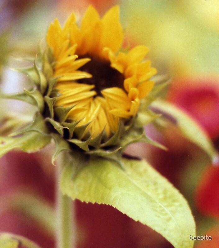 Sunflower by beebite