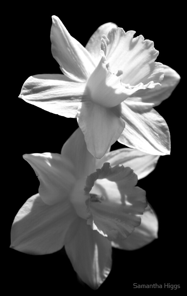 """Daffodils in Black and White"" by Samantha Higgs 