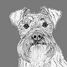 Schnauzer Dog Portrait by Adam Regester