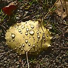 Forest Leaf With Raindrops In Eskilns by Barry W  King