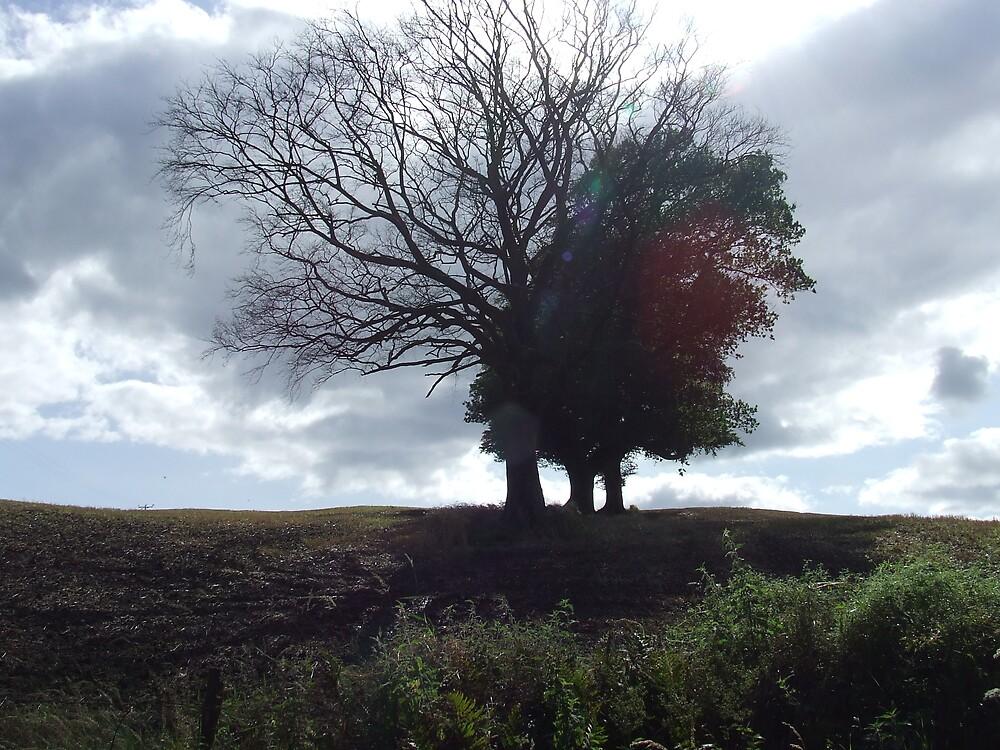 Three trees in a field by David Fulton