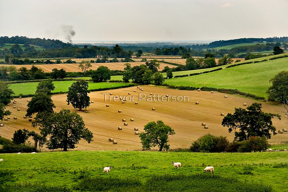 Fields of Gold by Trevor Patterson