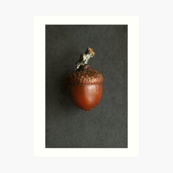 Brown Acorn Art Print