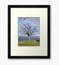 Tree with blue sky and clouds - Perth Framed Print