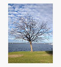 Tree with blue sky and clouds - Perth Photographic Print