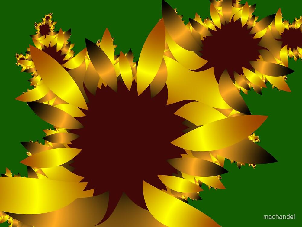 Sunflower by machandel