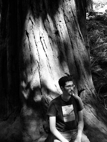 Redwood Tree by lorafaye