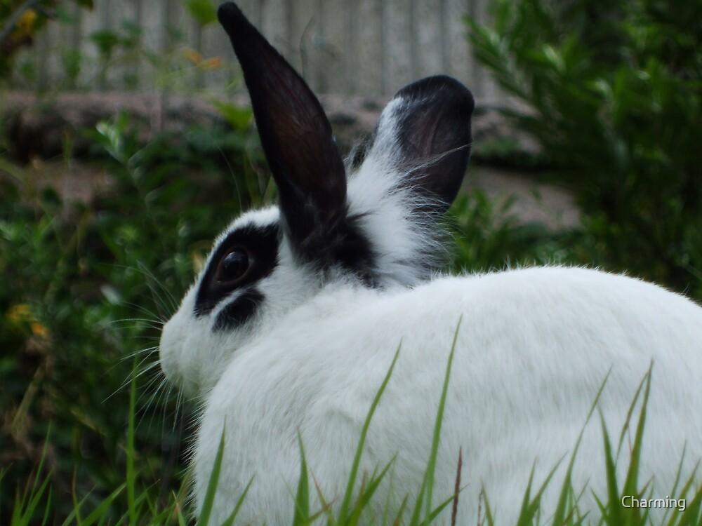 The Runaway Rabbit of the Cheongycheon by Charming