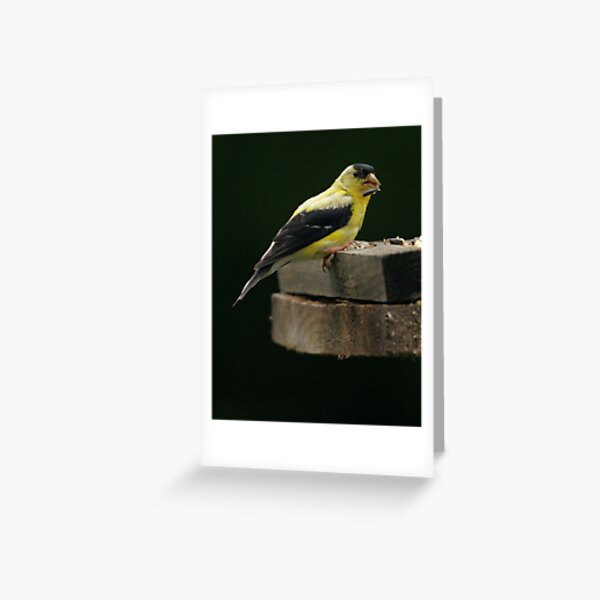 Gold Finch 2 Greeting Card