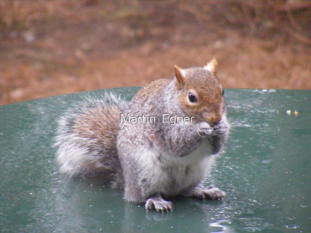 squirrel eating nut by Martin  Egner