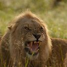 Young King by Leon Rossouw