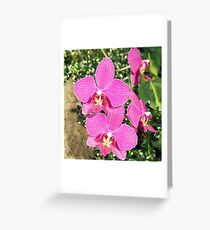 Pink Orchid Collage Greeting Card