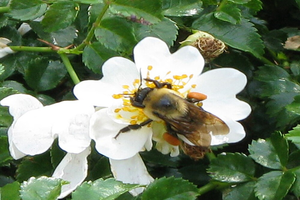 Busy Bee by LilyPearl0560