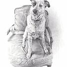 spotted dog in a fancy chair drawing by Mike Theuer