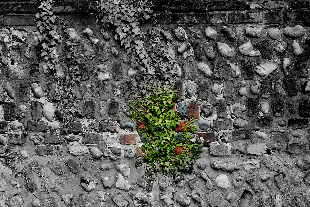 Ivy On A Brick Wall by Max Karen