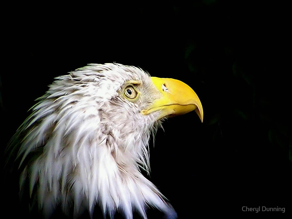 eagle eye view by Cheryl Dunning