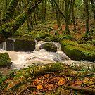 Golitha falls bodmin moor Cornwall by eddiej