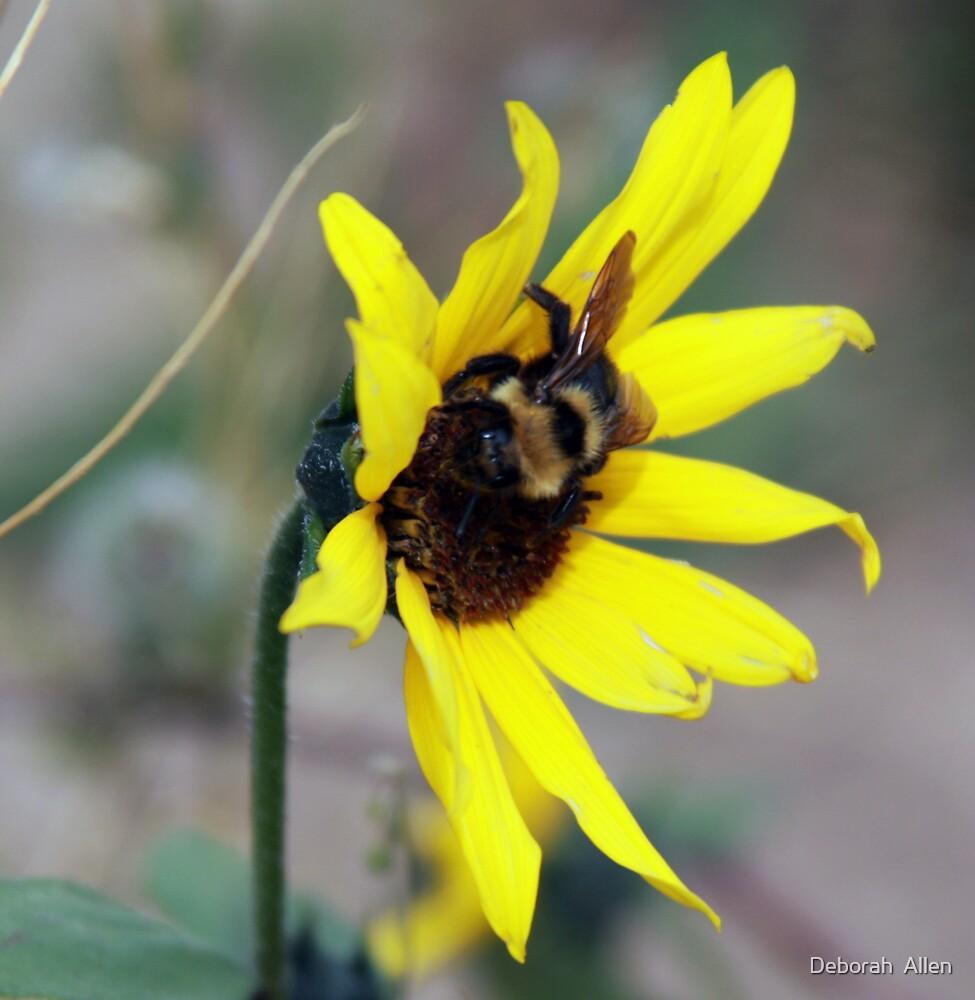 Wild Daisy and Bee by Deborah  Allen