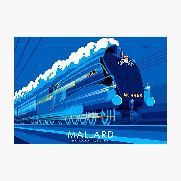 Mallard Photographic Print