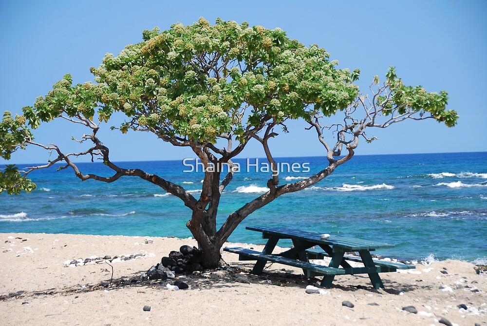hawaii by Shaina Haynes