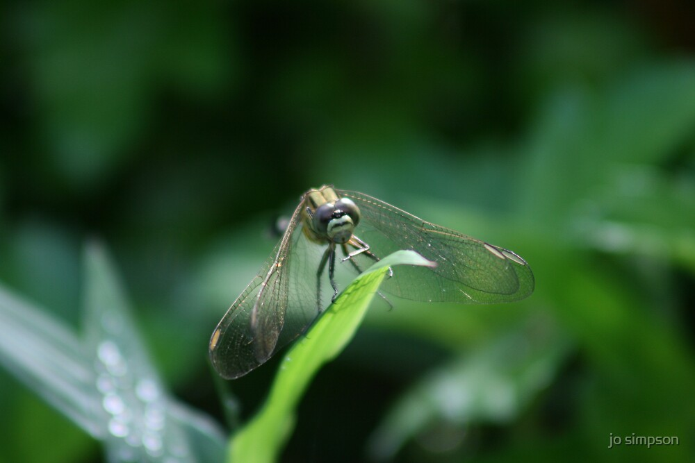 dragonfly by jo simpson