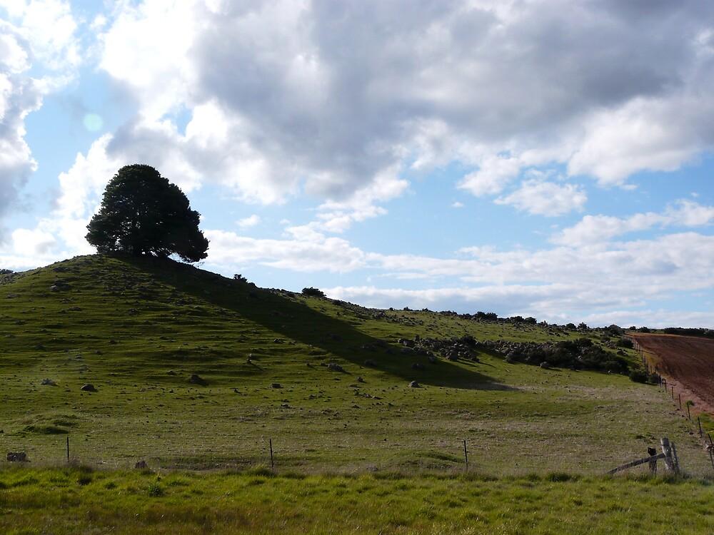 one tree hill by exhethia