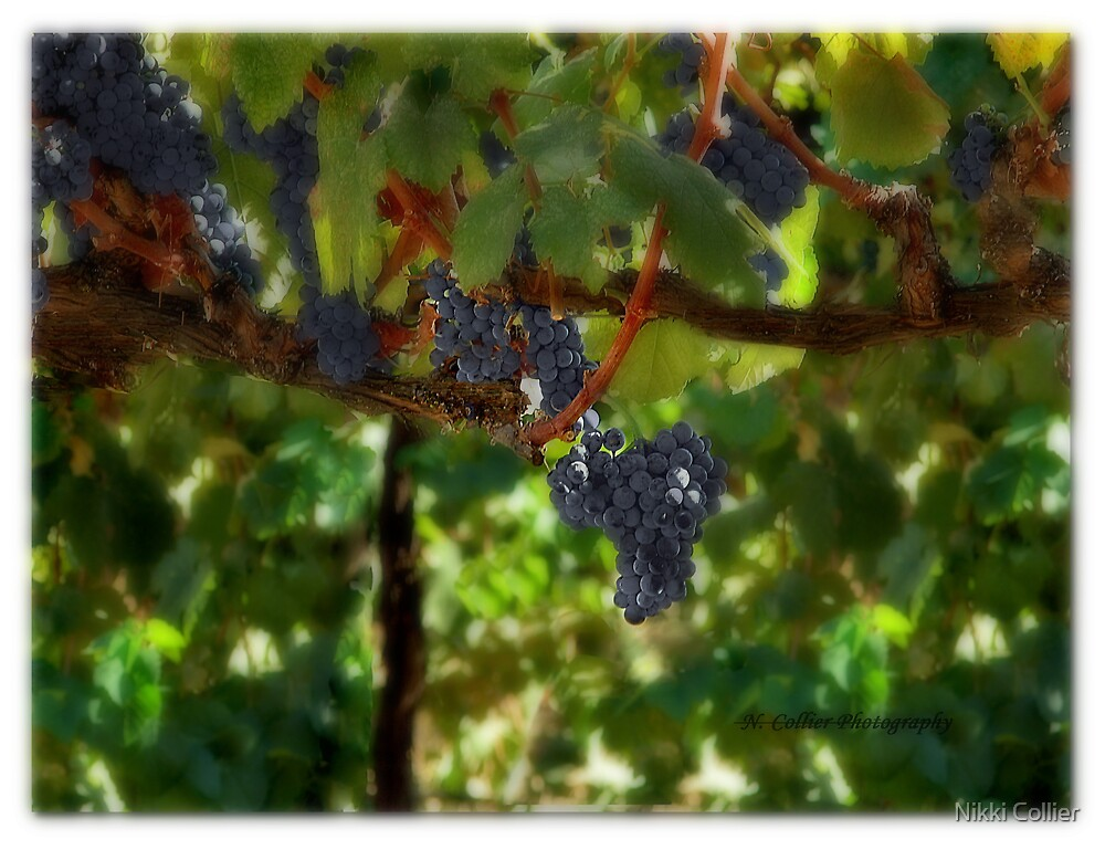 Vine Ripened by Nikki Collier