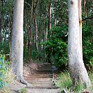 Through Here - Green Point, Valentine NSW by Bev Woodman