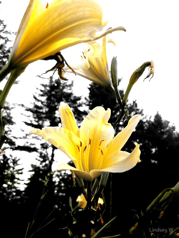Mellow Yellow. by Lindsey W