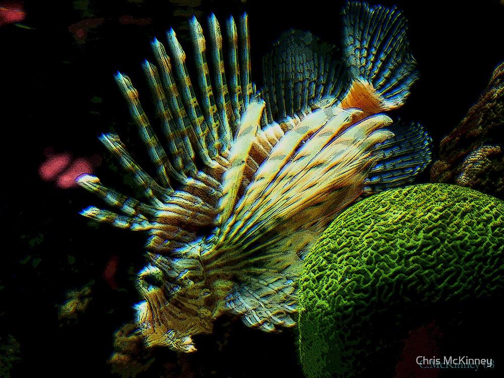 Lion Fish by Chris McKinney
