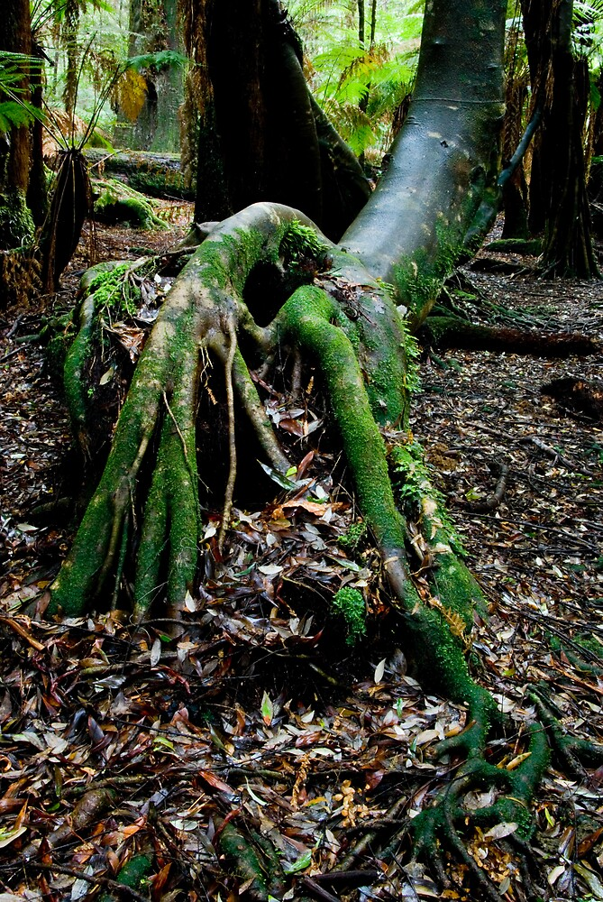 Tarkine Rainforest by Rhana Griffin