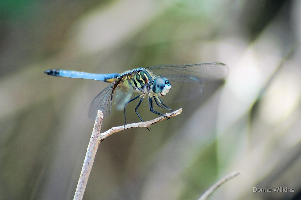 Blue Beauty by Donna Wilkins