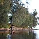 GREEN POINT - VALENTINE NSW by Bev Woodman