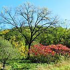 A Pretty Autumn Day  by lorilee