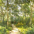 Woodland Path by Judi FitzPatrick