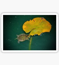 Baby Turtle And Lily Pad Sticker