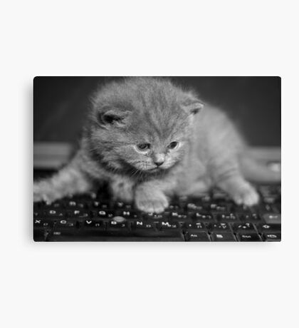 chat Canvas Print