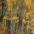 Red Aspen Forest Wilderness Floor by Bo Insogna