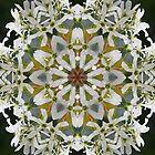 Lacy Serviceberry kaleidoscope - Amelanchier 0033 k5 by rvjames