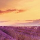 First Light in Provence  by Nicola  Pearson