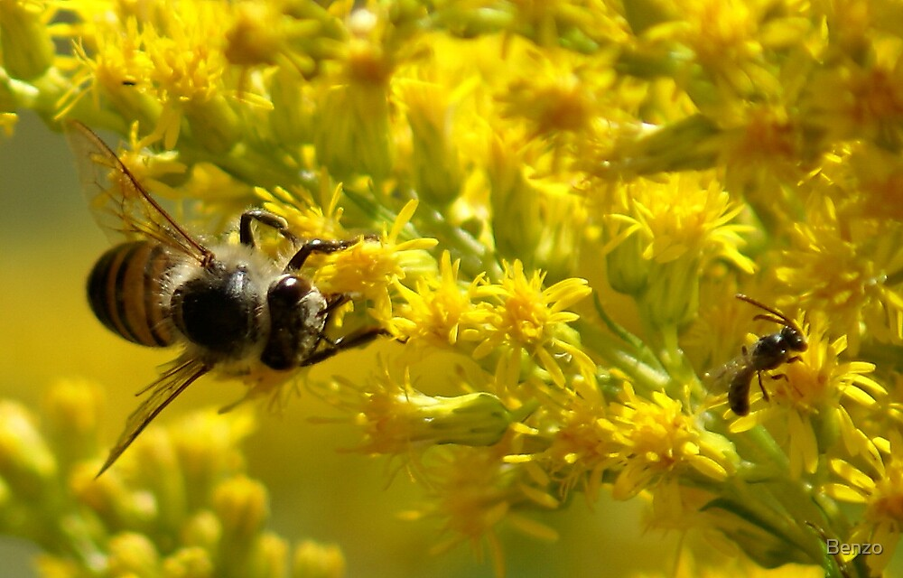 Bees at work by Benzo