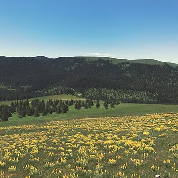 Yellow flowers on a hillside by MBassett500