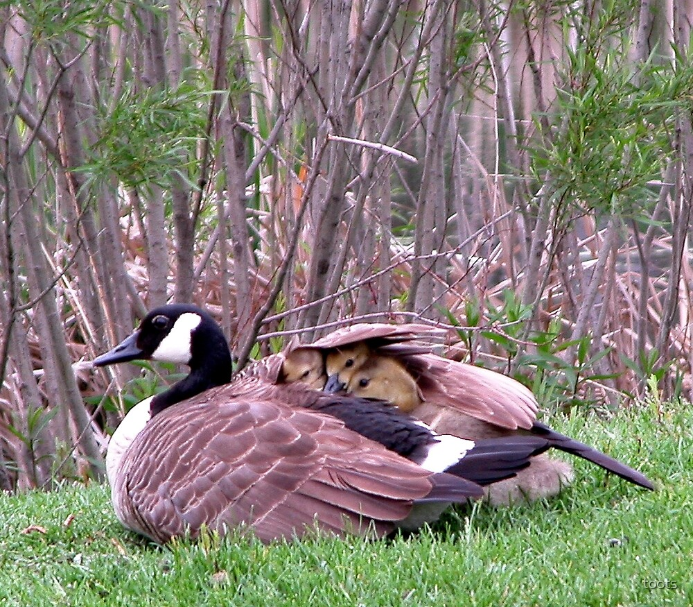 Mother Goose by toots