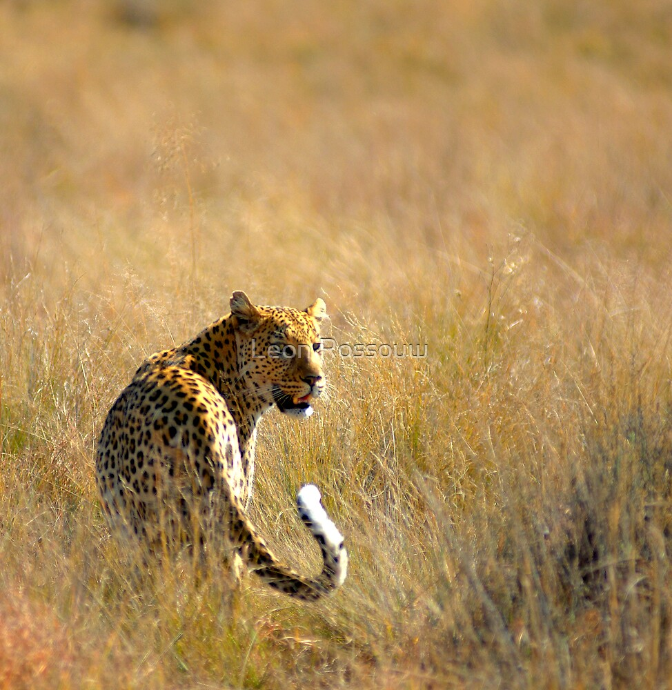 Staring Back   by Leon Rossouw