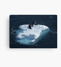 Seal, Lemaire Channel Canvas Print