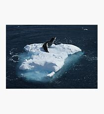 Seal, Lemaire Channel Photographic Print