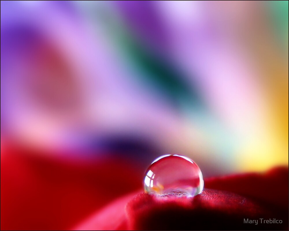 A red bubble....? by Mary Trebilco