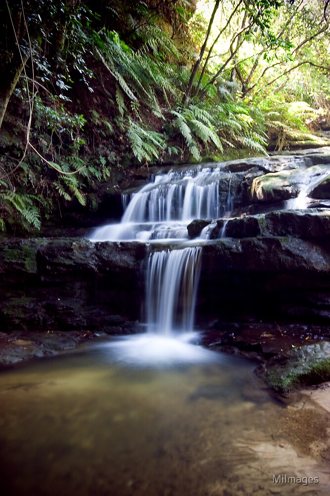 Leura Cascade Blue Mountains NSW by MiImages