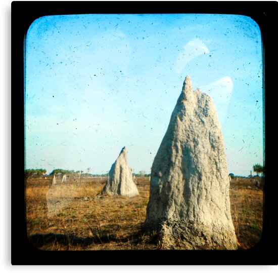 Termite Homes by Jules Campbell